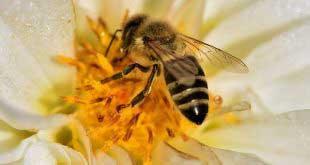 الملتقى الوطني الأول لتربية النحل بالصحراء من 21 إلى 28 فيفري 2010