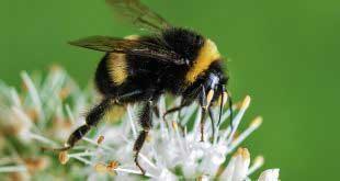 الملتقى الوطني الثاني لتربية النحل بالصحراء من 21 إلى 28 ديسمبر 2010