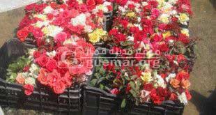 مزرعة ضاوي بالزقب - قمار مدينة الورود