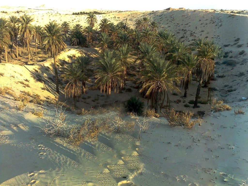واحات النخيل في الصحراء