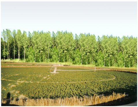 الفلاحة - السواتر بين الحقول