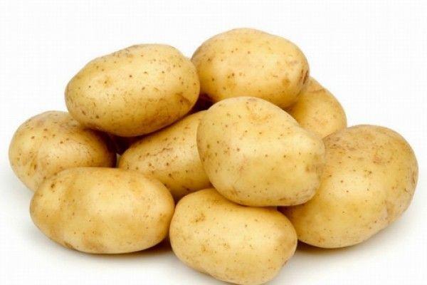 الفلاحة - منتوج البطاطا