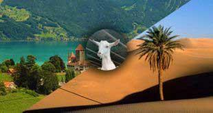 ماعز السانين السويسري تتأقلم مع الطبيعة الصحراوية - عبد القادر نقية من مدينة قمار مثال للنجاح
