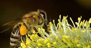 الملتقى الوطني الأول لتربية النحل بالصحراء من 19 إلى 28 ديسمبر 2018