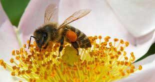 الملتقى الوطني التاسع لتربية النحل بالصحراء من 19 إلى 28 ديسمبر 2017.